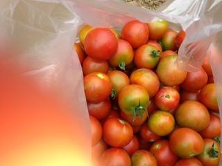 __tomato.JPG